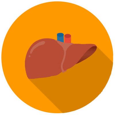liver_icon2